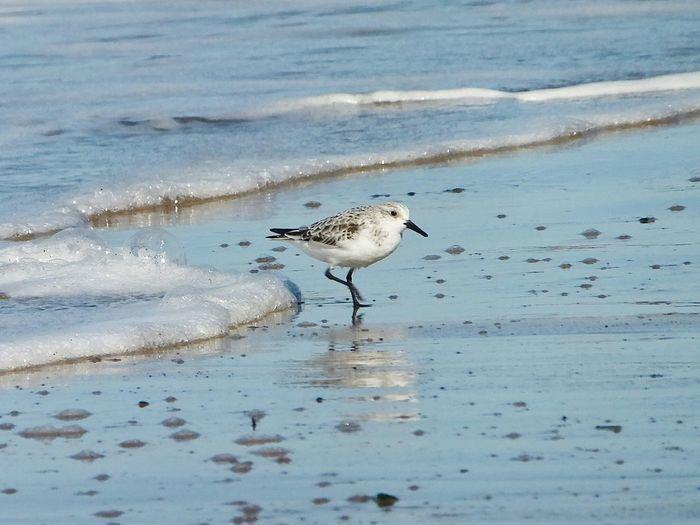 Birds walking on shore