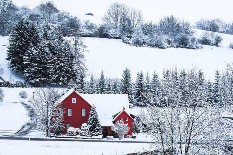 Little Red Riding Hood Winter Nature Landscape