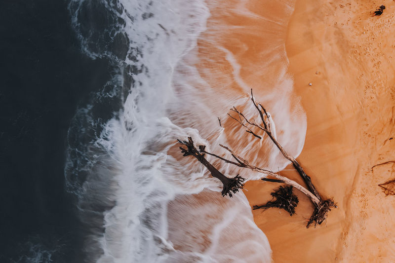 High angle view of plant on beach