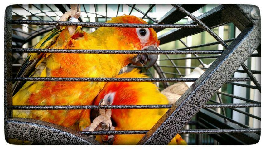 :( Birds