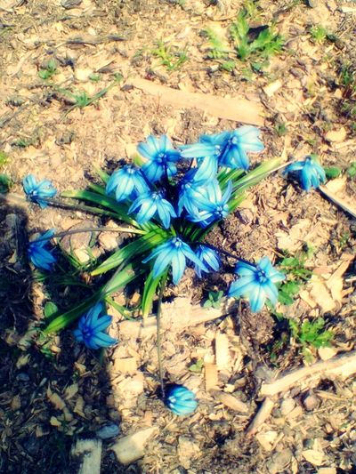 Bahar Ve çiçekler Spring And Flowers😄😄✌🌸🌸
