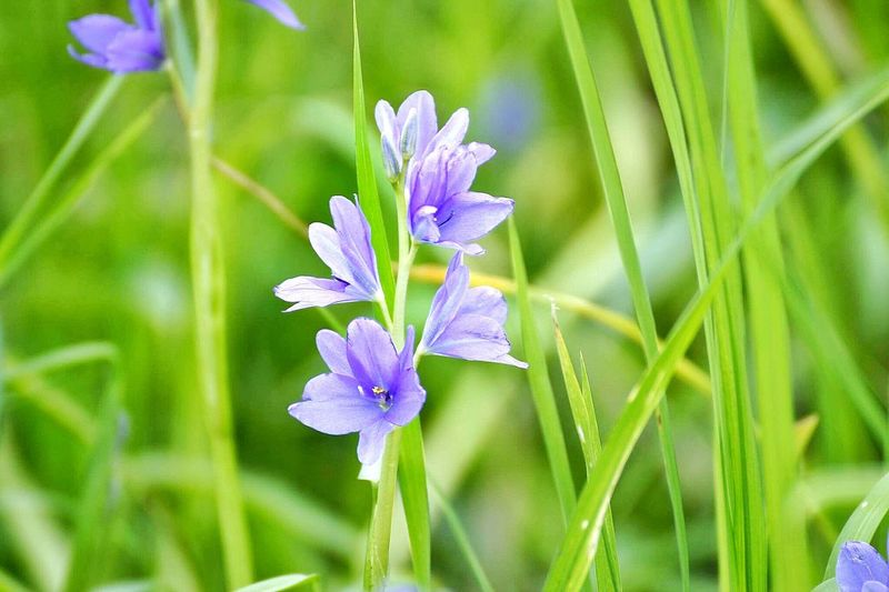 Flowers Flower Nature Growth Fragility Beauty In Nature Petal Freshness Plant Green Color Flower Head Day Purple Outdoors Focus On Foreground Close-up No People Leaf Crocus
