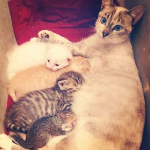 Mama cat and litte squirrel <3