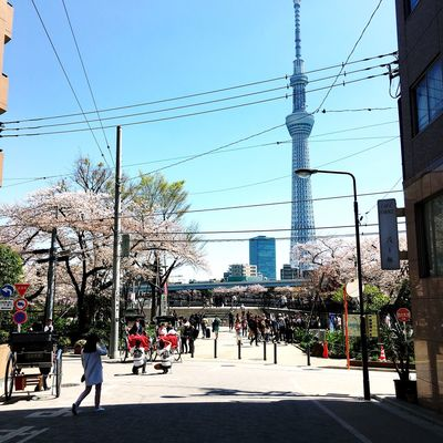 Sakura Tokyo Sky Tree Architecture Building Exterior Built Structure Cable City City Life City Street Day Electricity  Group Of People Nature Outdoors Plant Power Line  Power Supply Real People Road Sky Street Sunlight Transportation Tree Walking