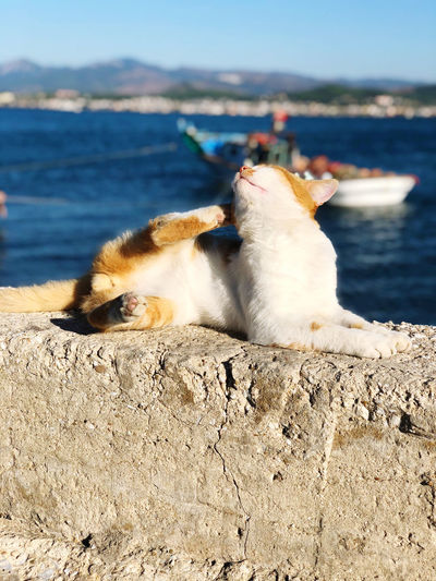 Cat relaxing on retaining wall