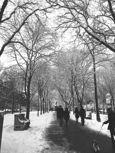 Commonwealth Mall Winter People Photography