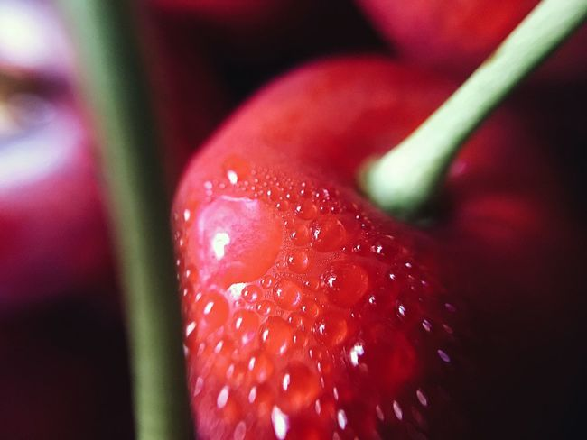 Cherries | Red Close-up Nature Selective Focus Growth No People Freshness Beauty In Nature Cherry Fruit Food