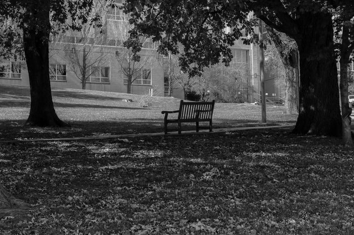 Bench Beauty In Nature Day Empty Grass Growth Nature No People Outdoors Solitary Moments Tree