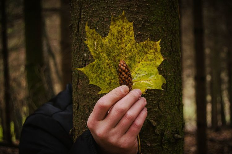 Close-up of person hand holding yellow leaf