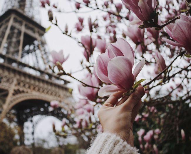 Paris Eiffel Tower Tour Eiffel France Springtime Spring Flower Hand EyeEm Best Shots EyeEmNewHere