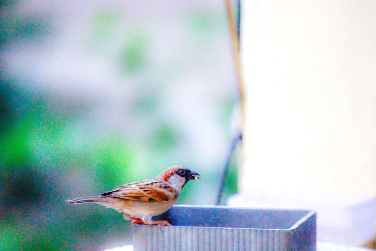 Side view of bird perching