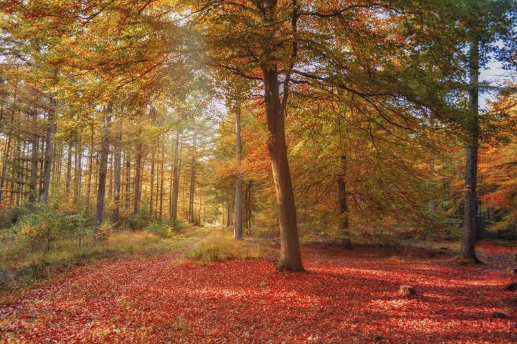 Fall in love Autumn Leaf Tree Nature Forest Beauty In Nature Scenics Change WoodLand Tranquil Scene Tranquility Outdoors Landscape Red Fog No People Day Tree Trunk Rural Scene