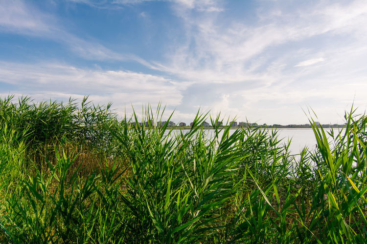 Plants Growing On Lakeshore Against Sky