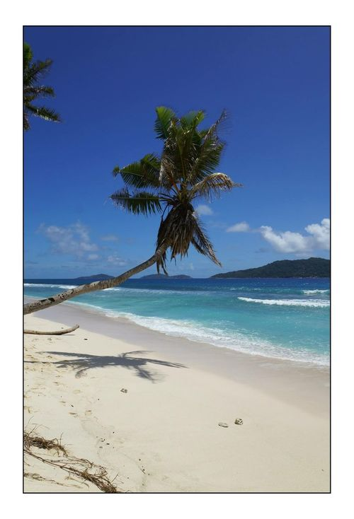Palm Trees Trip ToSeychelles Seychelles Indianocean
