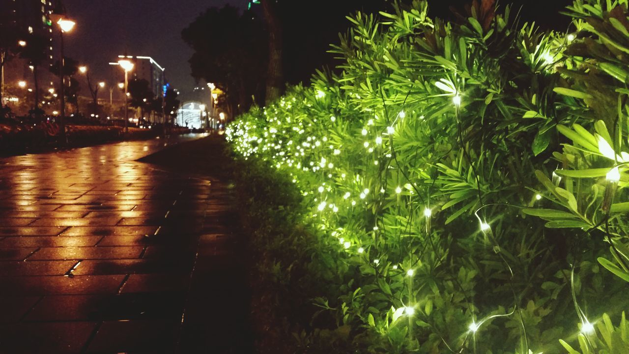 night, tree, illuminated, growth, outdoors, building exterior, nature, no people, city, architecture