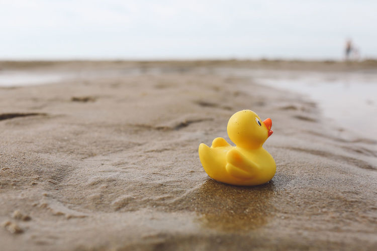 Close-up of rubber duck on wet sand at beach