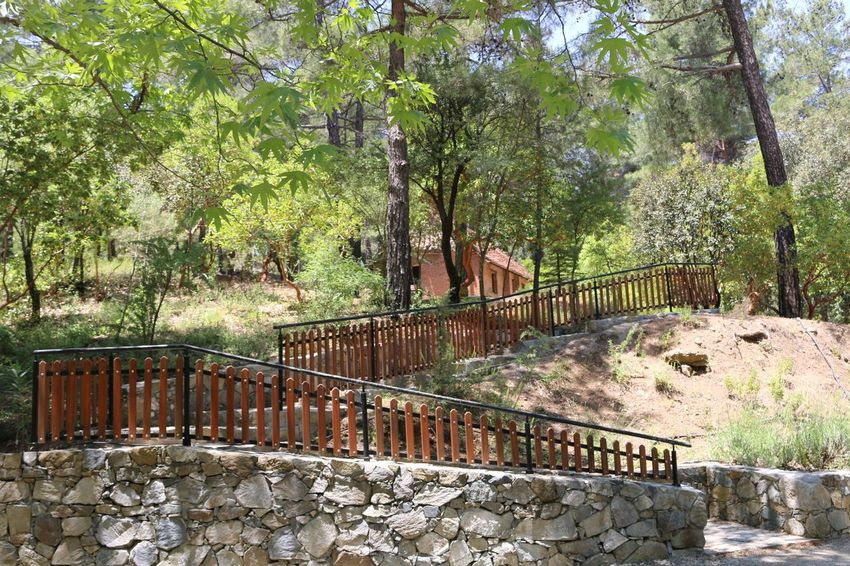 Church Stairs Wood Trees Forest Platania Park Side No People Mountain Troodos Cyprus Natural Beauty Nature_collection Nature Beauty Naturelovers Nature Photography Forest Path Forest Trees Forestwalk Forest Photography Forest Walk Church Architecture Churches Religion Relegion Nature Lover