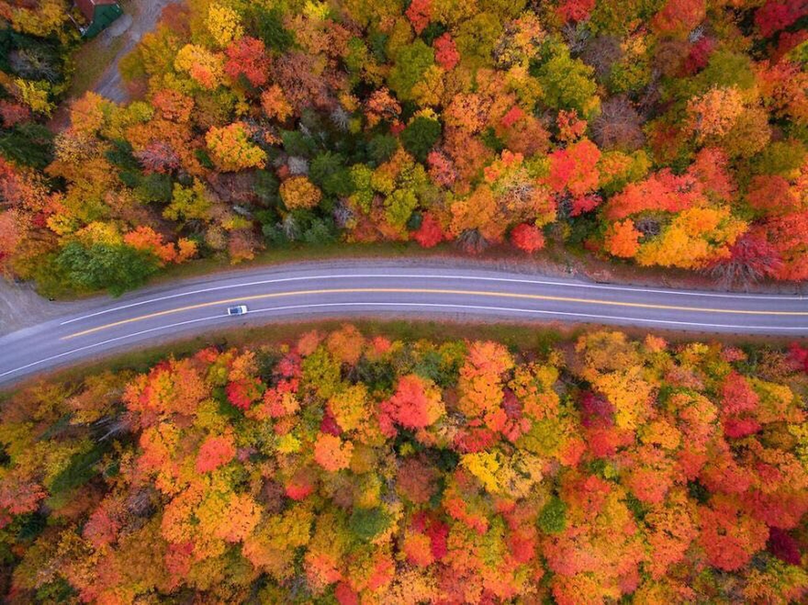 autumn, change, leaf, tree, beauty in nature, nature, scenics, orange color, outdoors, tranquil scene, tranquility, no people, forest, day, maple tree, red, maple leaf, landscape, growth, multi colored, plant part, maple