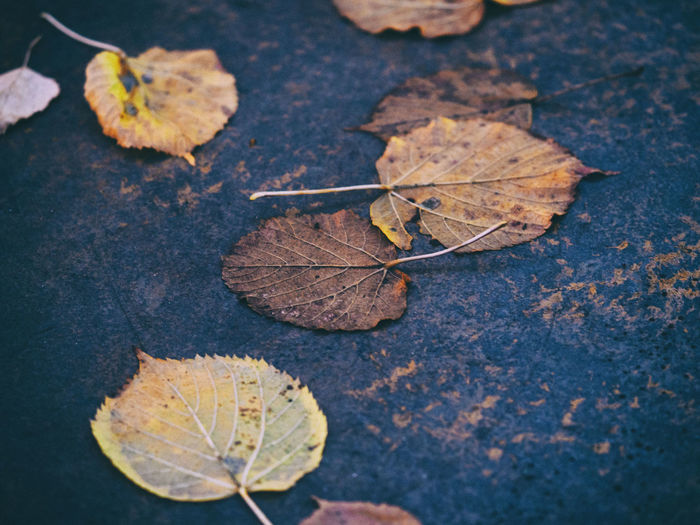 Nature Photography Textured  Textures And Surfaces Autumn Beauty In Nature Change Close-up Dry Fallen Leaf Leaves Nature Nature_collection Old Outdoors Selective Focus Stone Texture Stone Textures
