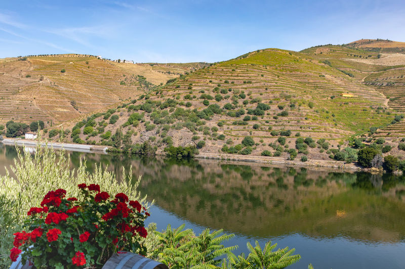 River Douro reflection 3 Beauty In Nature Day Environment Flower Flowering Plant Freshness Growth Lake Landscape Mountain Nature No People Outdoors Plant Reflection Scenics - Nature Sky Tranquil Scene Tranquility Water