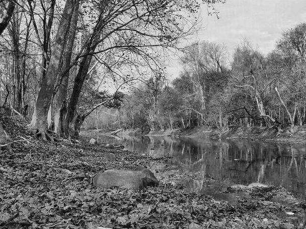 Salamonie First Eyem Photo Shades Of Grey Photography Light And Shadow Painting With A Camera Eye Em Nature Lover Nature