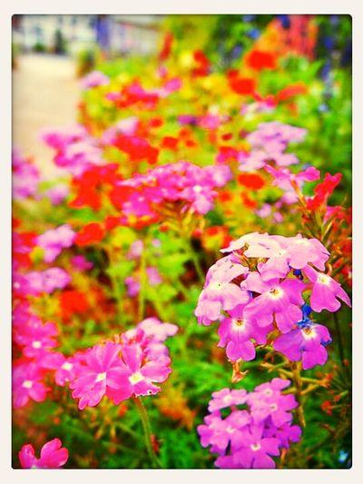 Nature Flower Garden gard