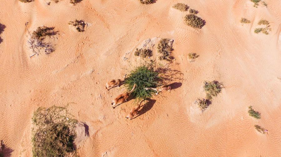 Plants growing on sand dune