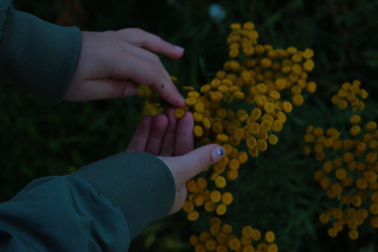 Cropped Hands Of Woman Holding Yellow Flower Growing On Field