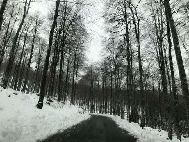 Snow Cold Temperature Winter Nature Tree Weather Tranquility Beauty In Nature Forest Road No People