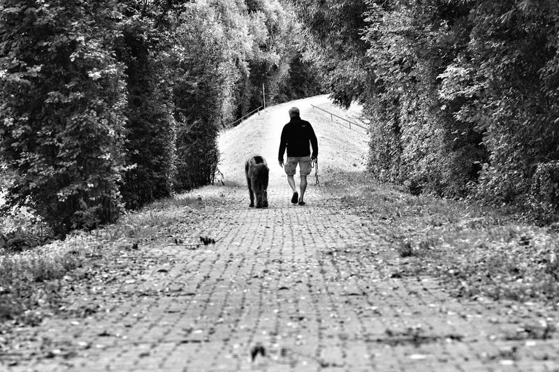 Rear view of man with dog walking on footpath amidst trees