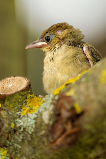 Close-up of a bird on rock
