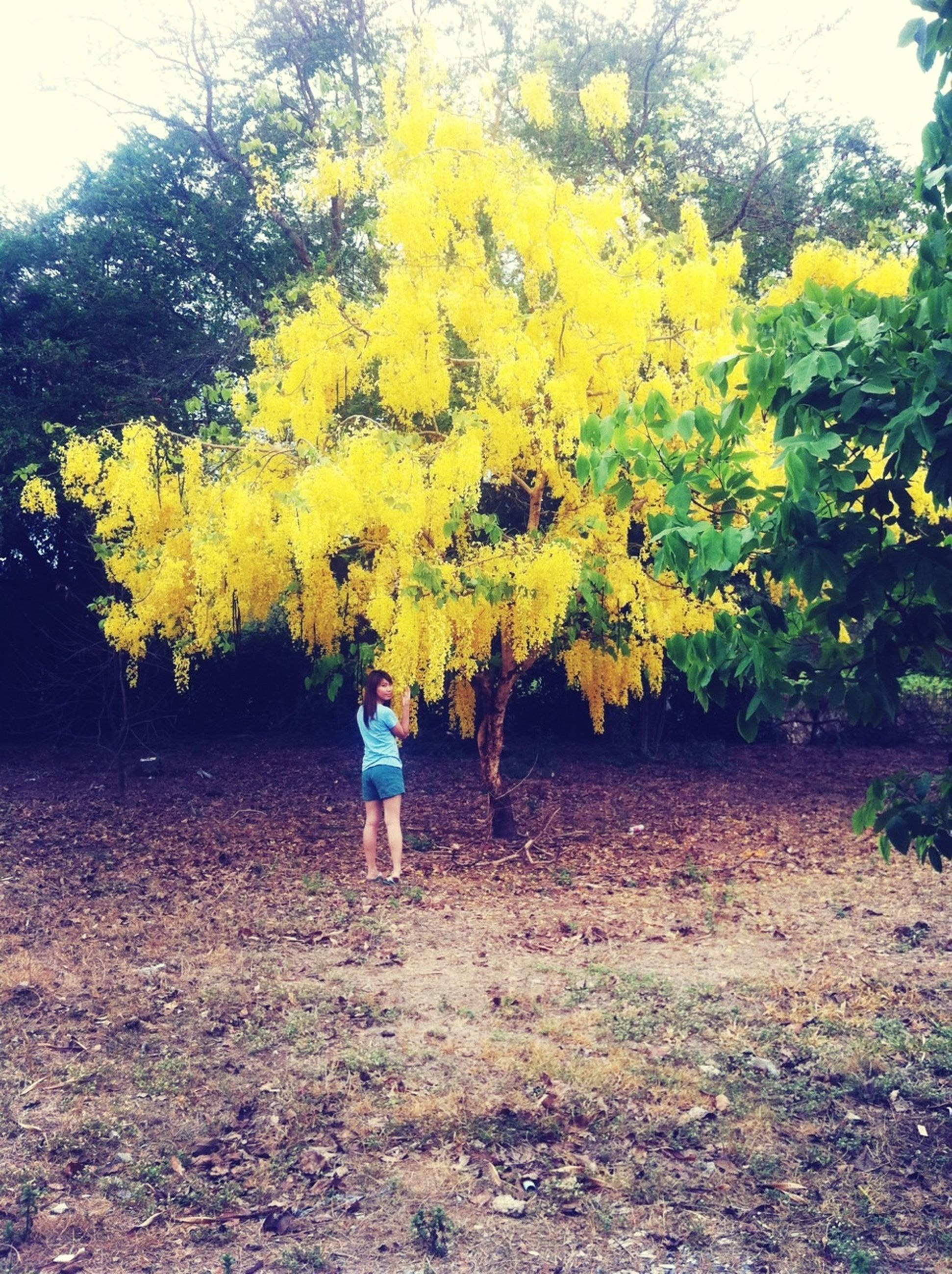 lifestyles, full length, yellow, rear view, leisure activity, tree, casual clothing, autumn, walking, childhood, season, girls, standing, growth, nature, flower, field, change