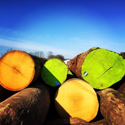 Wood Factory Netherlands Dieren Sunny Day Green Color Colorful