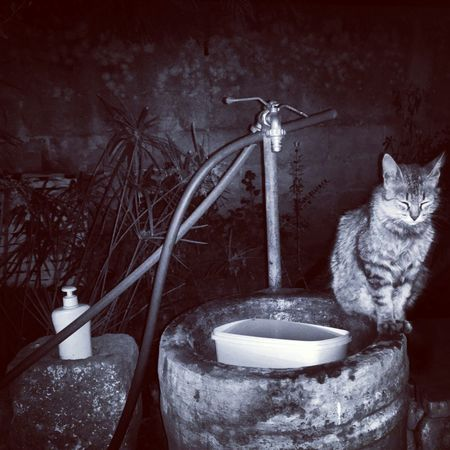 Cats Cat Lovers Cats Of EyeEm Cheese! Captured Moment Nature Taking Photos