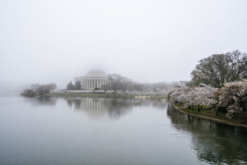 Foggy sunrise over water Architecture Building Exterior Cherry Blossoms Fog Jefferson Memorial No People Outdoors Reflection Tidal Basin Tree Water