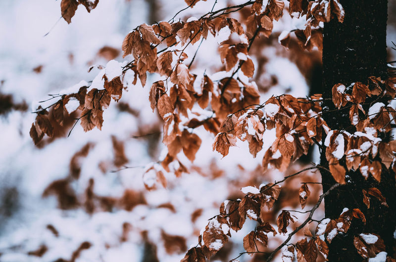 Winter Snow Cold Temperature Beauty In Nature Leaf Day Nature Plant Part Dry Plant No People Change Leaves Tree Land Selective Focus Autumn Outdoors Natural Condition Focus On Foreground Poland Frozen Poland Eyeem Kaszuby Passion