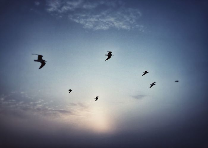 Flying Bird Animals In The Wild Animal Themes Mid-air Large Group Of Animals Flock Of Birds Low Angle View Silhouette Migrating Sky Wildlife Animal Wildlife Nature Beauty In Nature No People Spread Wings Outdoors Sunset Togetherness