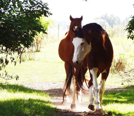 💕💕📸🐎 Horses Livestock Outdoors Agriculture Nature Photography Love Gorgeous TooCute