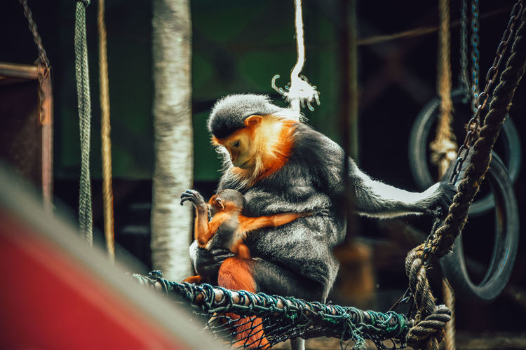 Monkey sitting in cage at zoo