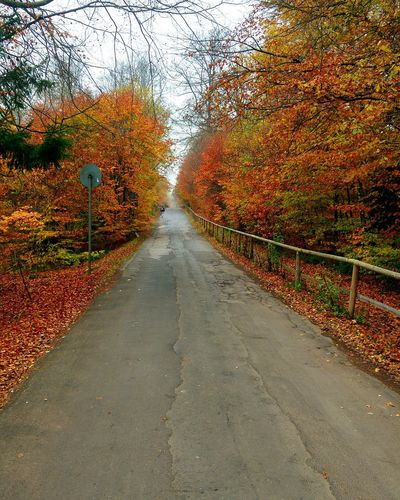 The Way Forward Diminishing Perspective Autumn Tree Road No People Day Outdoors Nature Scenics Beauty In Nature Sky Roadtrip Roadsidephotography Indiansummer Forest Photography Forest Road Nature Autumn