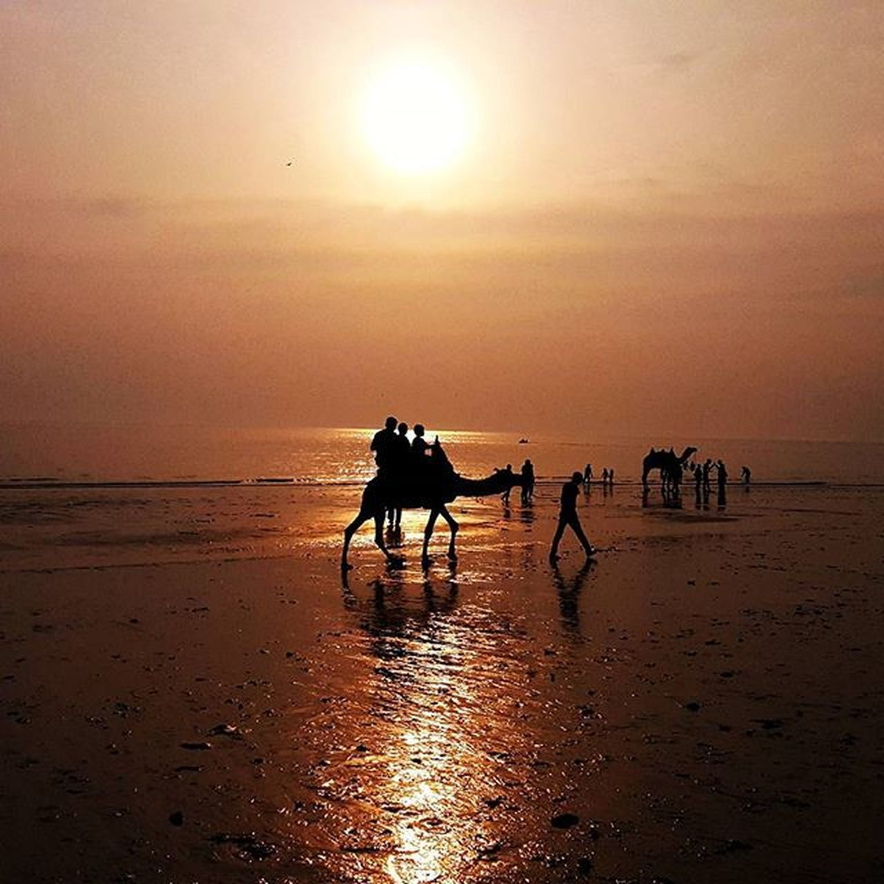 sunset, beach, sea, water, nature, sand, sun, beauty in nature, horizon over water, shore, scenics, sky, tranquil scene, reflection, silhouette, tranquility, idyllic, outdoors, domestic animals, men, leisure activity, vacations, mammal, real people, people