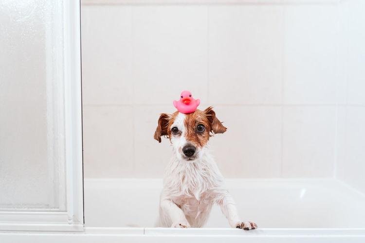 Portrait of a dog on landscape at home