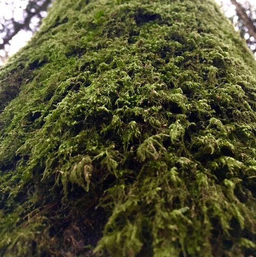 Close-up of tree
