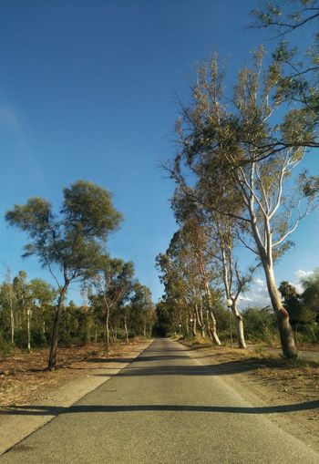 Nature Scenics Tranquil Scene Tree Road The Way Forward Outdoors Blue Sky No People Growth Day Beauty In Nature Clear Sky Nature Modern