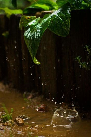 Nature Water Leaf Tree Beauty In Nature Green Color No People Plant Growth Outdoors Day Freshness Rain RainDrop