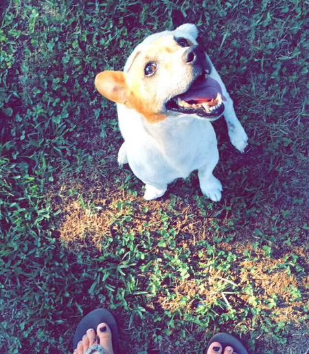when your dog actually looks straight up at you when you're taking a pic😂