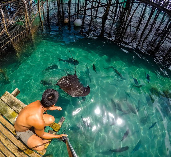 Stingray in Surigao Adult Day Full Length High Angle View Leisure Activity Lifestyles Men Nature One Person Outdoors Real People Rear View Sea Shirtless Swimming Three Quarter Length Turquoise Colored Water Waterfront