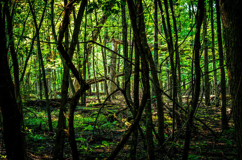 Bamboo - Plant Beauty In Nature Day Forest Green Color Growth Land Nature No People Non-urban Scene Outdoors Plant Rainforest Scenics - Nature Tranquil Scene Tranquility Tree Tree Trunk Trunk Wilderness WoodLand