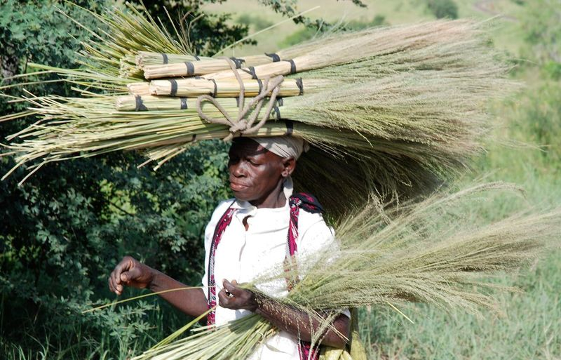 High angle view of senior woman carrying brooms on head while walking amidst plants