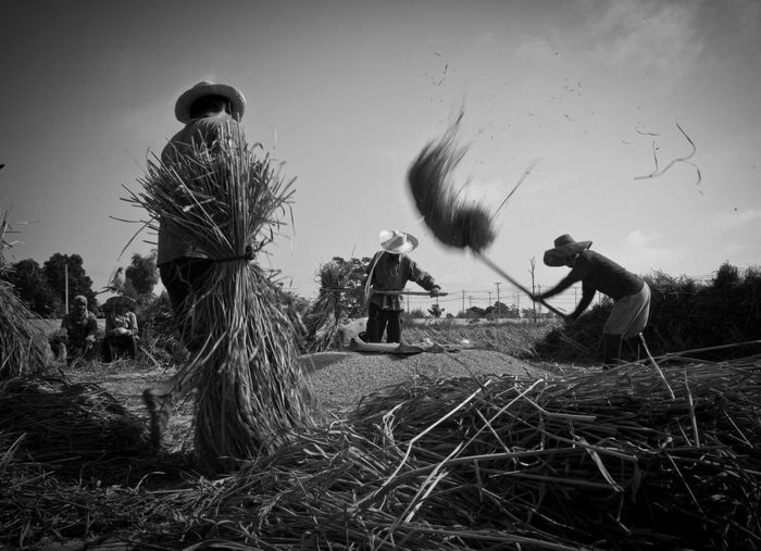 Farmer's activity Field Real People Sky Clear Sky Men Agriculture Outdoors Rural Scene Working Scarecrow Day Growth Grass Landscape Occupation Nature Teamwork People The Street Photographer - 2017 EyeEm Awards